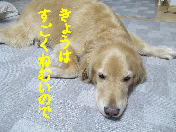 2015-1-8-ハチ-0011