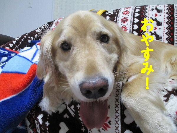 2015-1-11-ハチ-0005