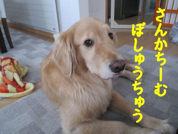 2015-1-2-ハチ-0013