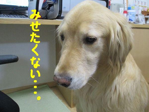 2015-01-21-ハチ-0004
