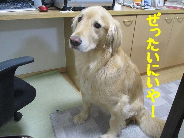 2015-01-21-ハチ-0001