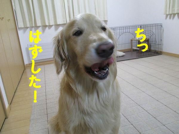 2015-01-23-ハチ-0022