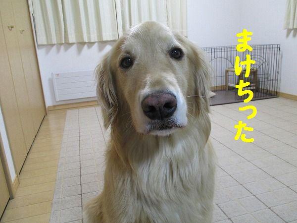 2015-01-23-ハチ-0024