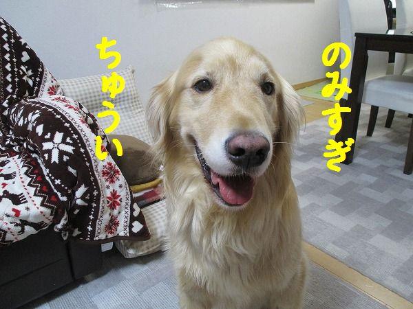 2015-01-25-ハチ-0002