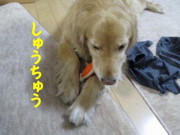 2015-01-31-ハチ-0013