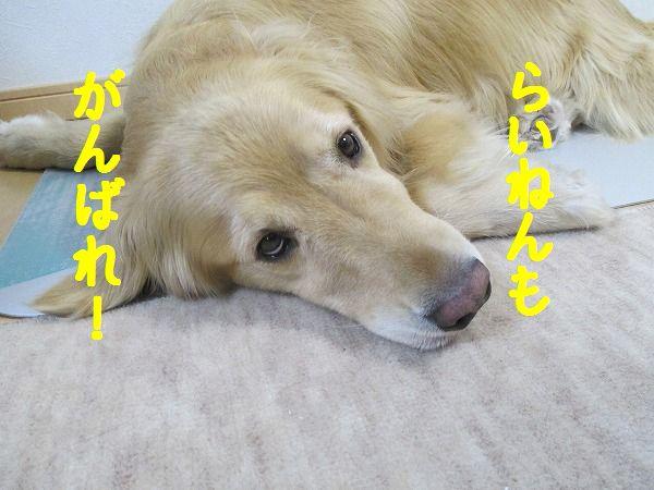 2015-02-02-ハチ-0002