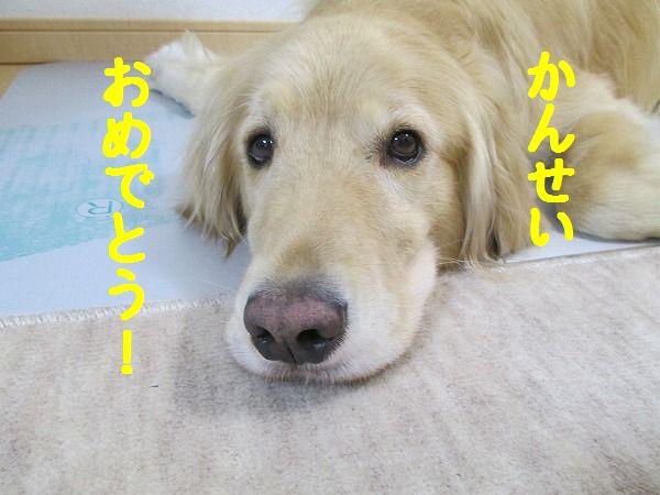 2015-02-08-ハチ-0003