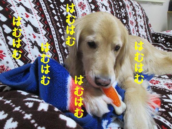 2015-02-09-ハチ-0003