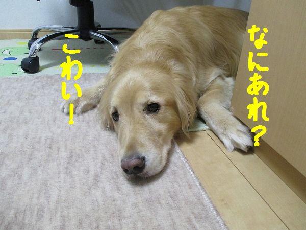 2015-02-12-ハチ-0007