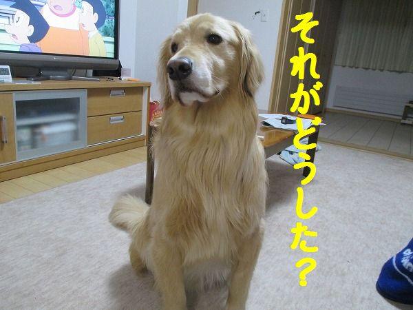 2015-02-13-ハチ-0001