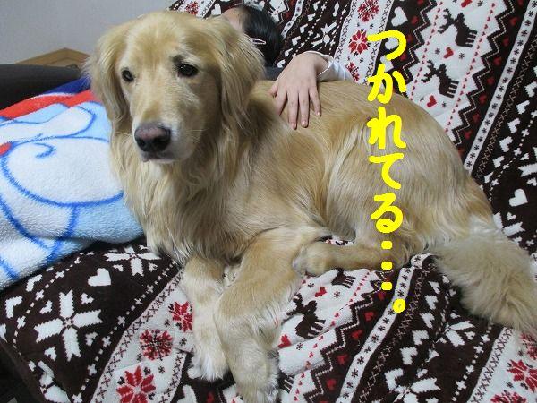 2015-02-21-ハチ-0003