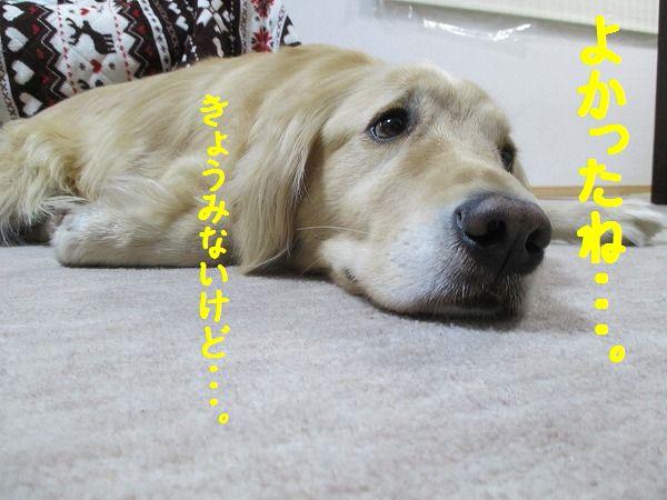 2015-02-22-ハチ-0003