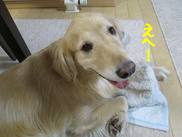 2015-02-24-ハチ-0001