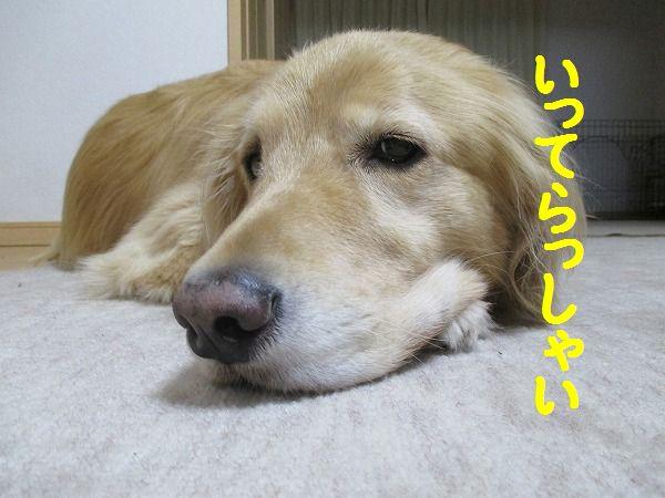 2015-02-27-ハチ-0006