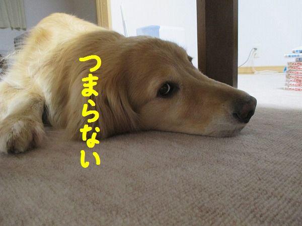 2015-03-05-ハチ-0003