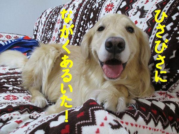 2015-03-09-ハチ-0003