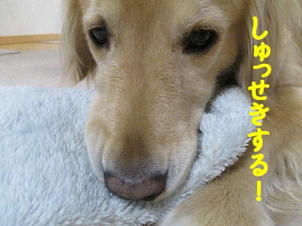 2015-03-12-ハチ-0007