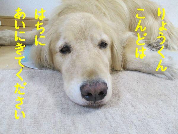 2015-04-25-ハチ-007
