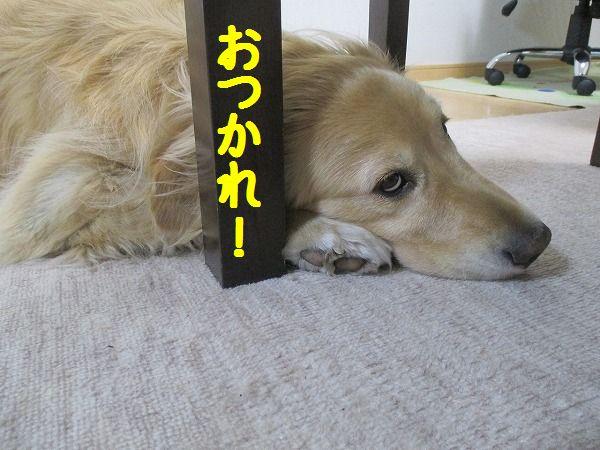 2015-05-02-ハチ-004