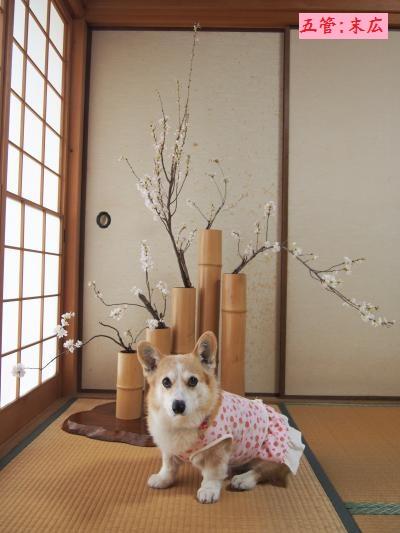 桜、五管1