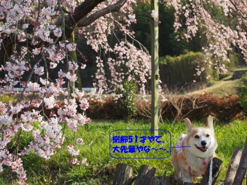桜の下でにこにこ