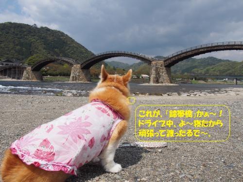 錦帯橋眺める節ちゃん