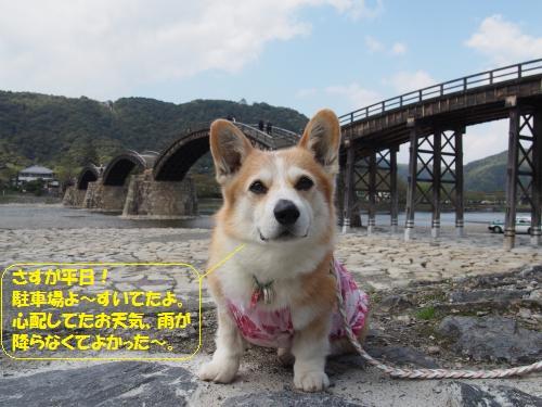 錦帯橋にきた~