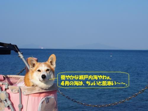 瀬戸内海きれぇで