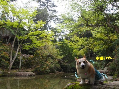宮島 もみじ谷公園
