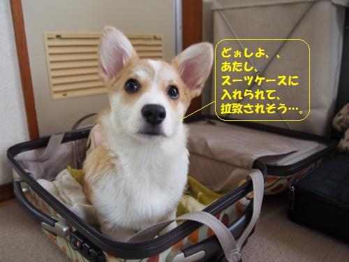 スーツケースにいれて帰るじょ
