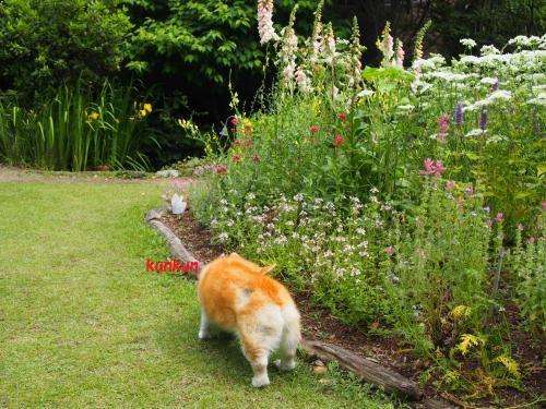 お庭散策 くんくん