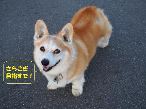 かわいぃ節ちゃん