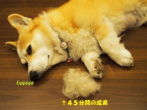 抜け毛と~