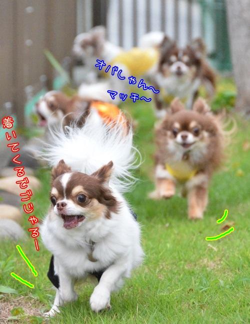 DSC_1009_20150621000520145.jpg