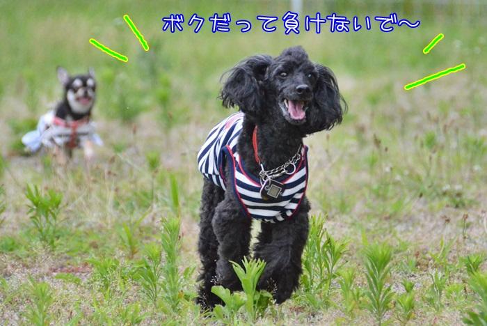 DSC_1434_20150709143003ce6.jpg