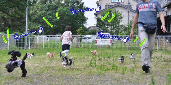 DSC_1477_20150709150028ba6.jpg