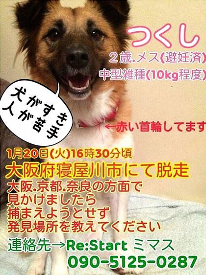 tsukushi1.jpg