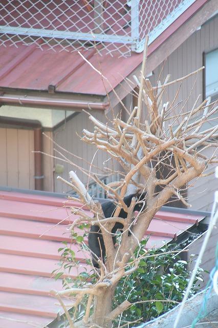 IMG_8167黒猫