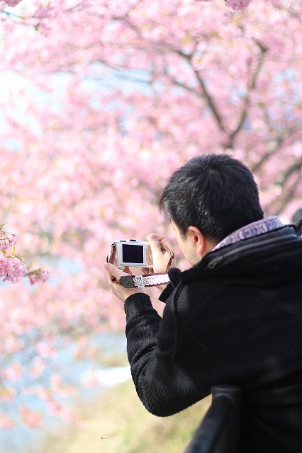 IMG_8218河津桜