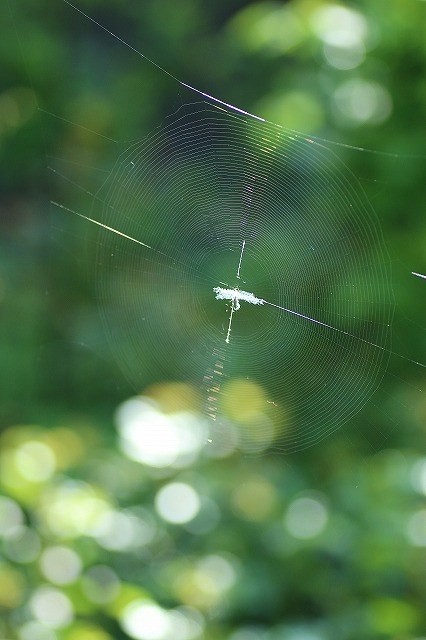 IMG_8971蜘蛛の巣