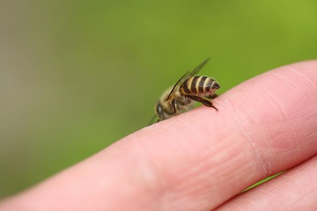 IMG_9637ミツバチ