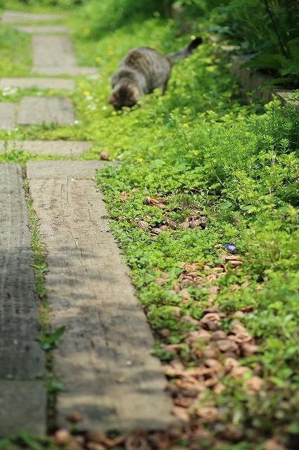 IMG_9223くるカラ