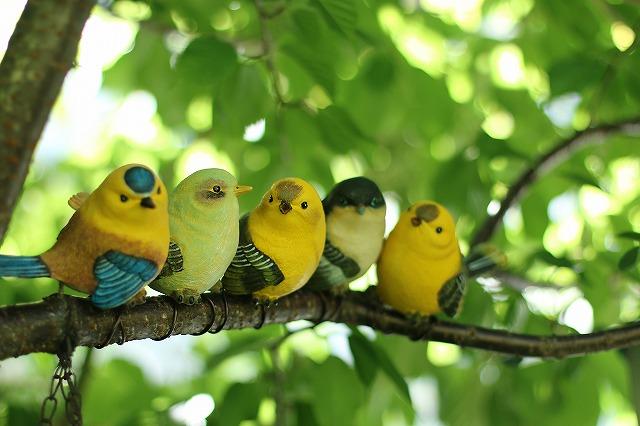 IMG_0254鳥さん♪