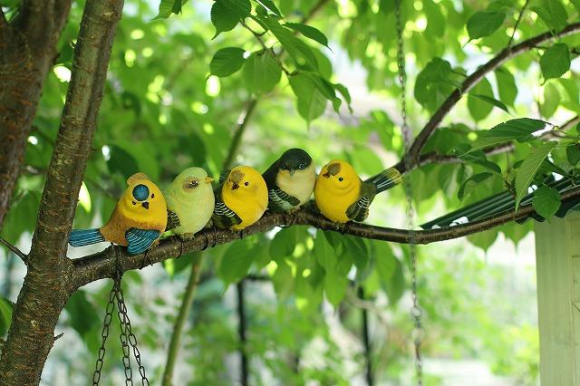 IMG_0248鳥さん♪