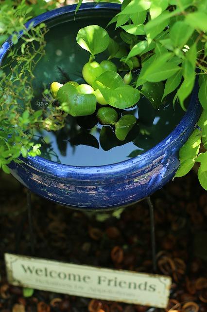 IMG_0737金魚鉢