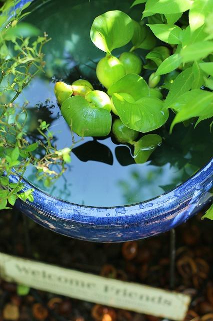 IMG_0741金魚鉢
