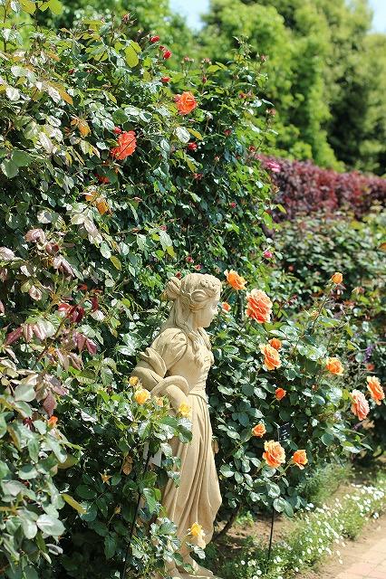 IMG_1361花菜ガーデン