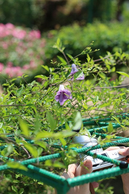 IMG_1366花菜ガーデン