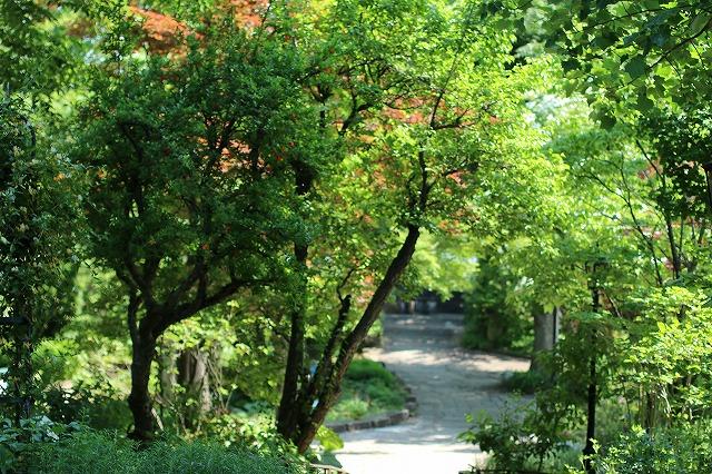 IMG_5178ハーブ庭園
