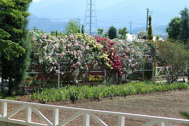 IMG_5181ハーブ庭園